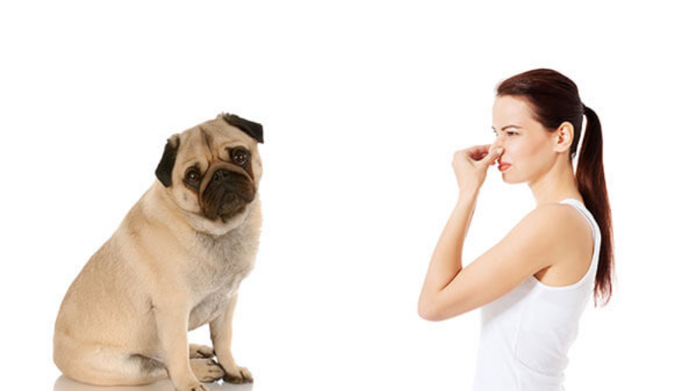 Do you have a Smelly Dog? Know The Reasons…