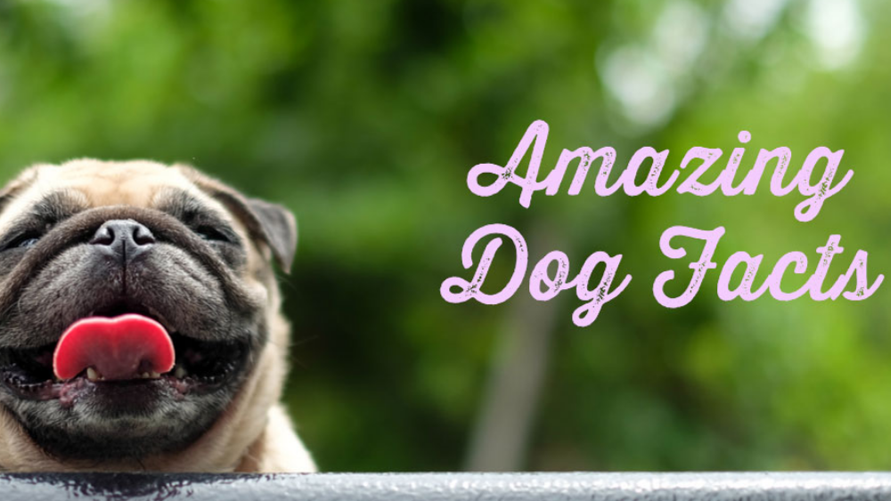7 Amazing Dog Facts That Would Make You Go Wow!