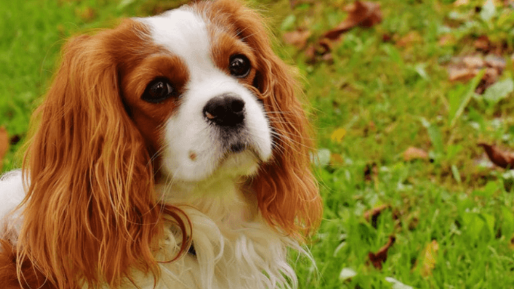 7 Dog breeds that will be your best friends in the City