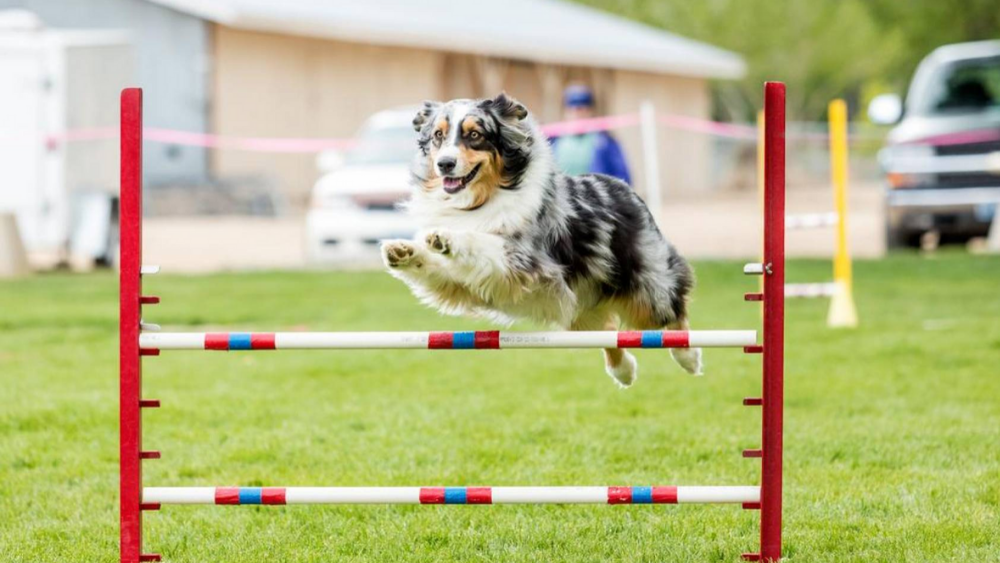 7 Things to remember when training your Dog