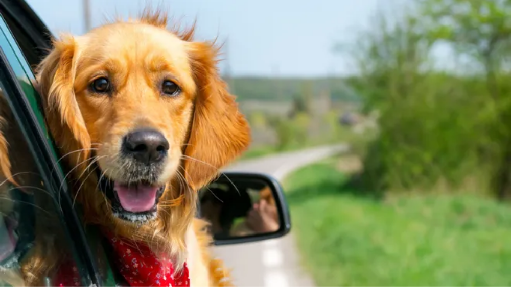 5 things to pack when you're on a road trip with your fur buddies