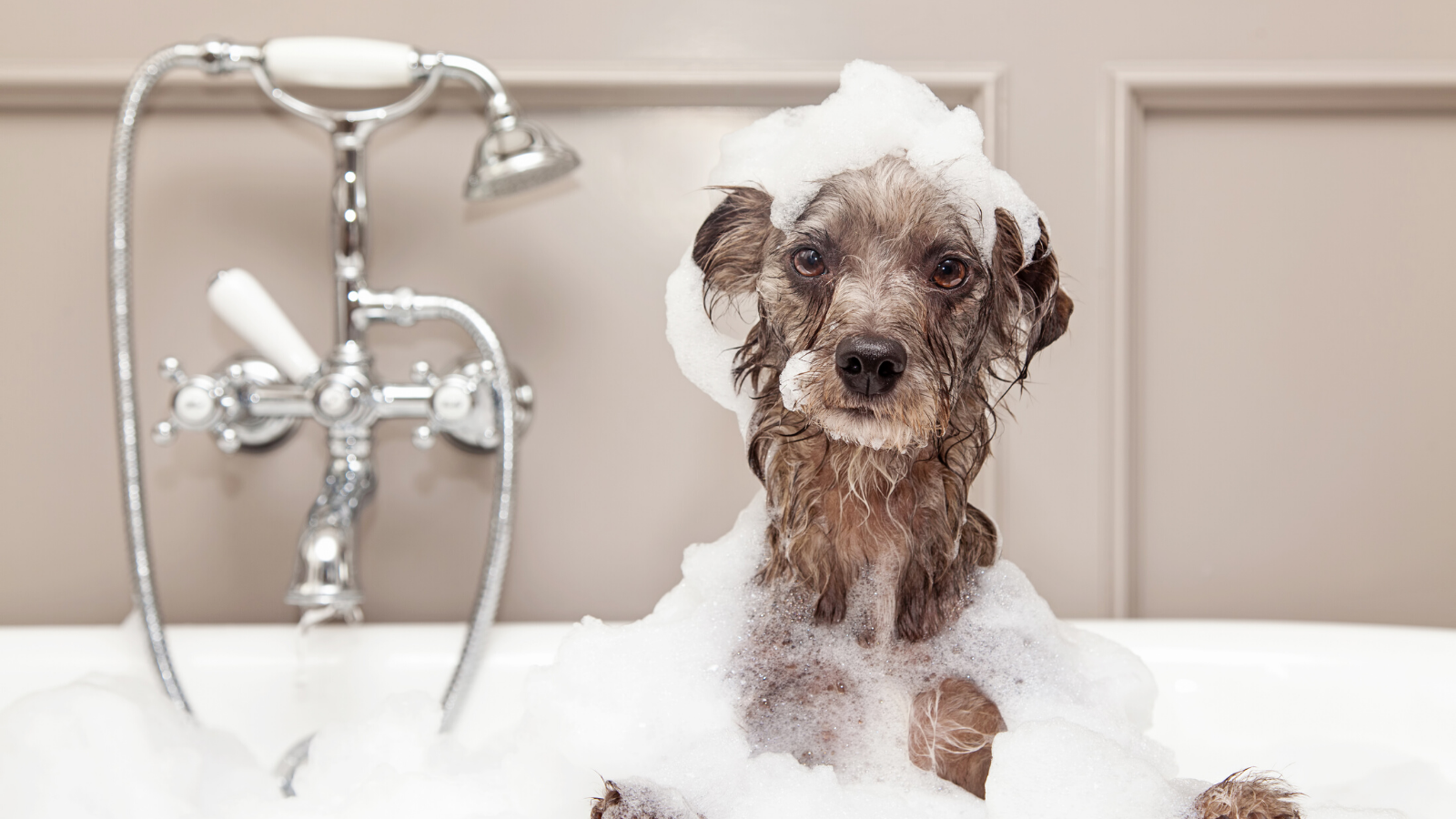 Quick guide to bathe your pets in the best possible way