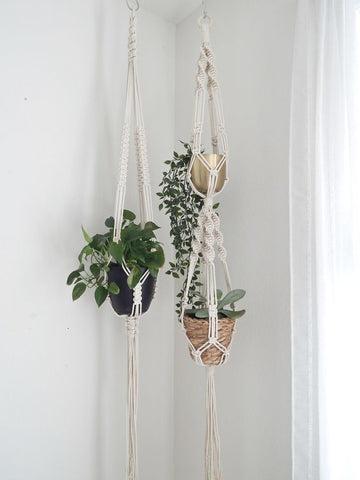 White Wall Paint Hanging Plants