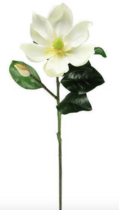 "Magnolia Bloom Stem 30""L"
