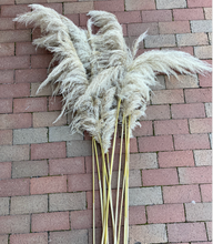 Load image into Gallery viewer, Pampas Grass - Large Natural