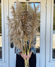Load image into Gallery viewer, Pampas Grass - Medium Brown