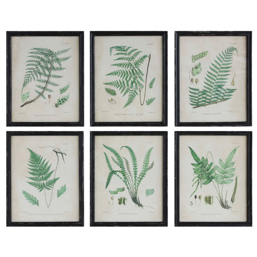 Framed Green Ferns