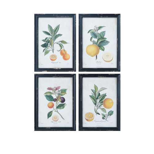 Framed Citrus