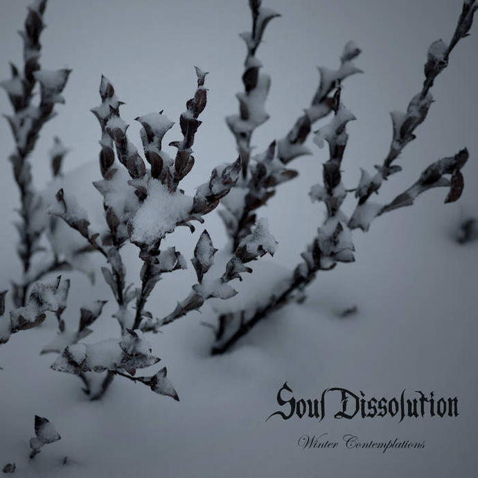 Title: Winter Contemplations