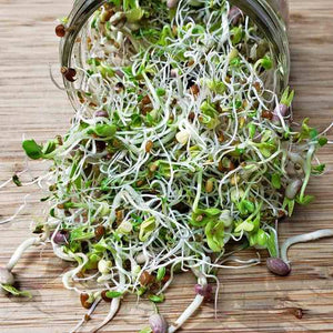 Sprouting Seeds - Spicy Mix 100grm