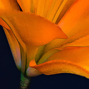 Macro of Lily Flower