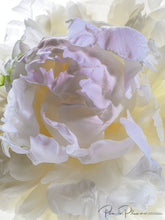 Load image into Gallery viewer, Peony in Full Bloom