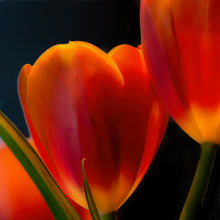 Load image into Gallery viewer, Tulip Trio