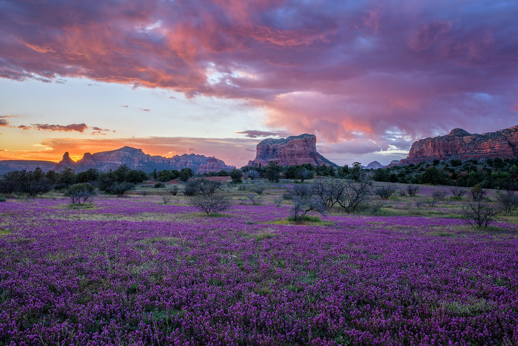 Wildflower Sunset in Sedona
