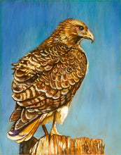 Load image into Gallery viewer, Red Tail Hawk