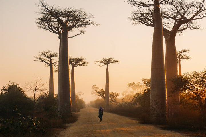 Welcome to Madagascar