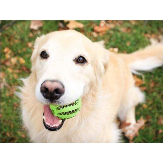 Interactive Rubber Chew Ball (Buy 2 Get 1 Free Just ADD To The Cart 3 —  MyLunaShop