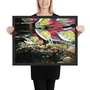 Salmon Run (Framed Poster)