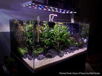 How To Set Up A C02 Enriched Planted Aquarium
