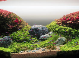 Hollantilainen Aquascaping-tyyli
