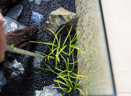 How to Add Plants to the Aquarium