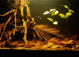 The Biotope Aquarium