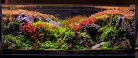 Aquascaping - Arranging rocks and wood and plants in a way that is purposeful and pleasing to the eye