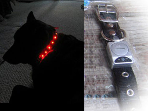 Flashing LED collar