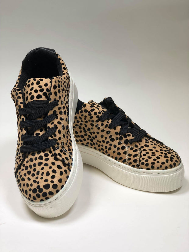 leopard sneaker lace up qupid  royal-08a