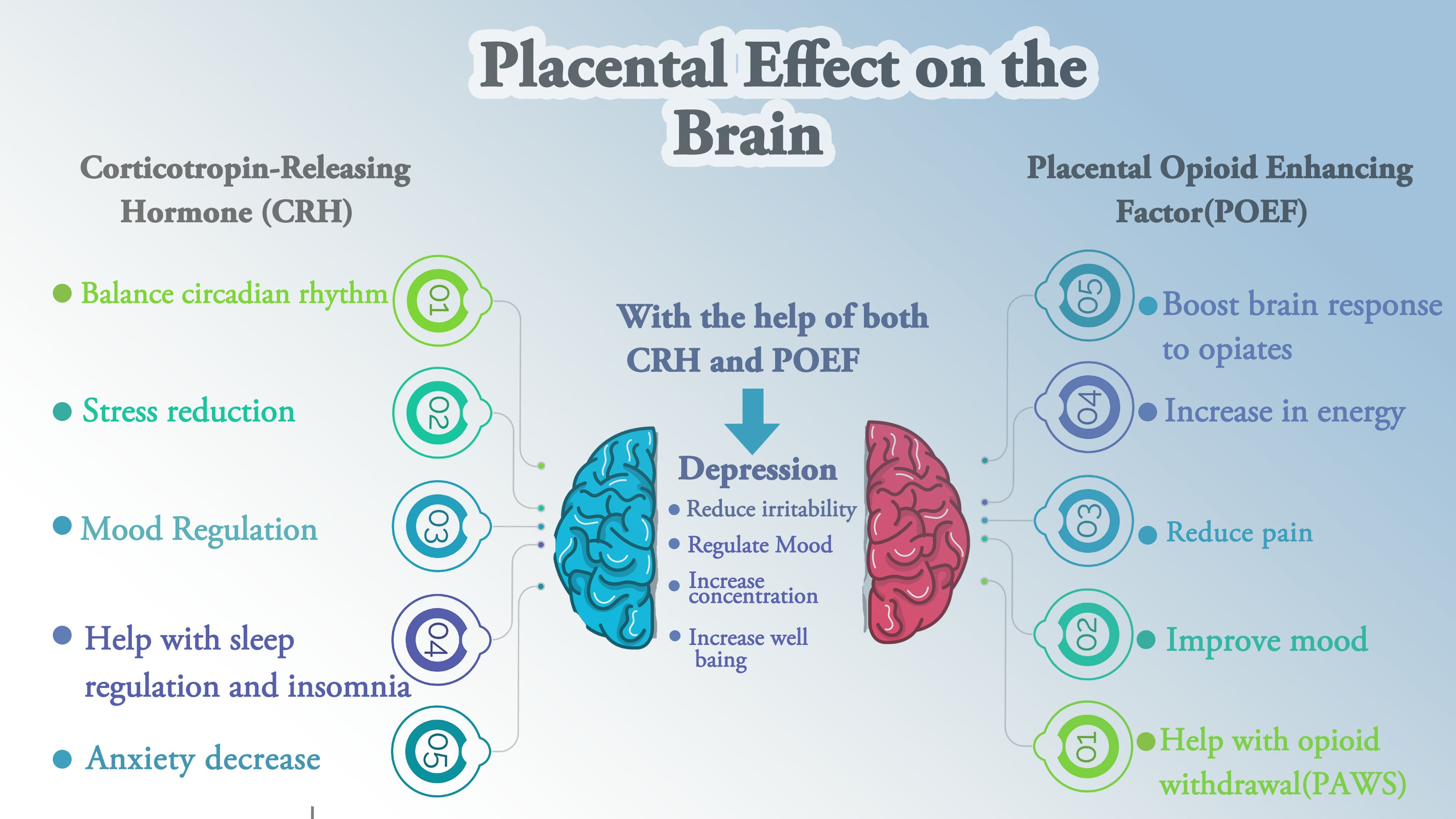 Placental Effect on the Brain Placental CRH helps reduce stress, anxiety regulate mood POEF boosts mood energy decrease pain together placenta reduces depression and increases well-being vitamin placenta placenta benefits placenta pills
