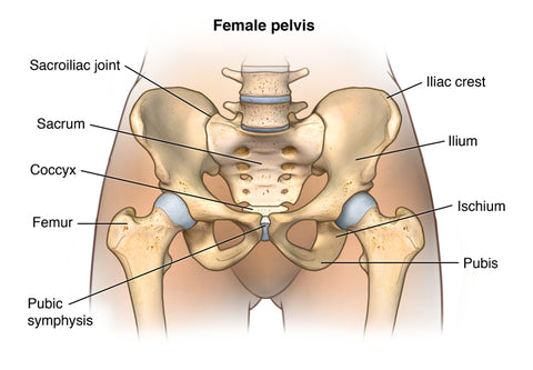 healthy pelvic floor from moms and pregnant women
