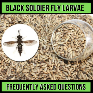 Black Soldier Fly Most Asked Questions
