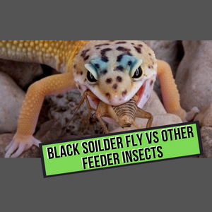 Black Solider Fly Vs Other Feeder Insects