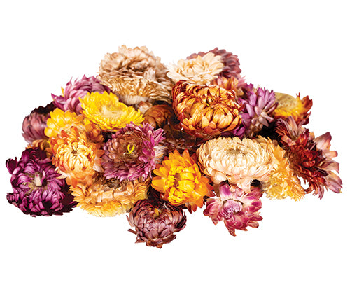 Dried Sunflowers Assorted 50g - Wild Ones Play