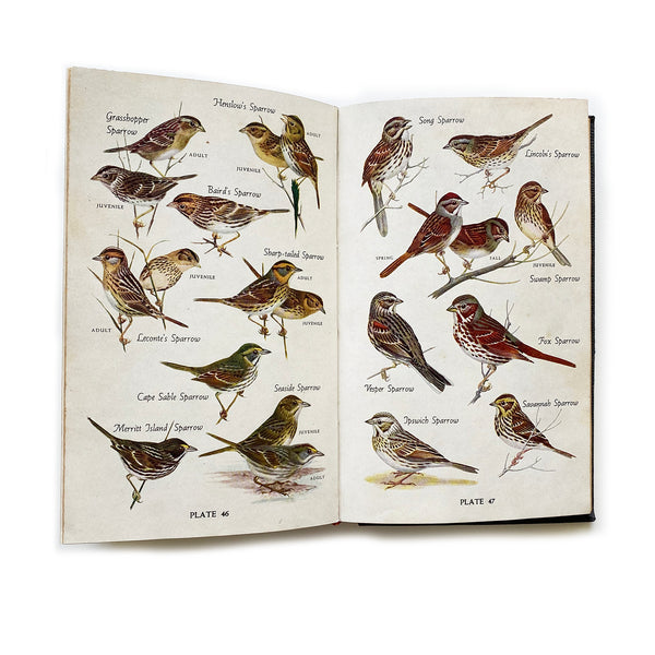 Vintage Book - Audubon Bird Guide Eastern Land Birds, Pough.