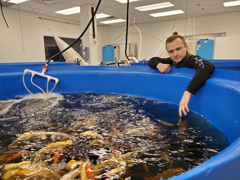 Fish used in aquaponic system