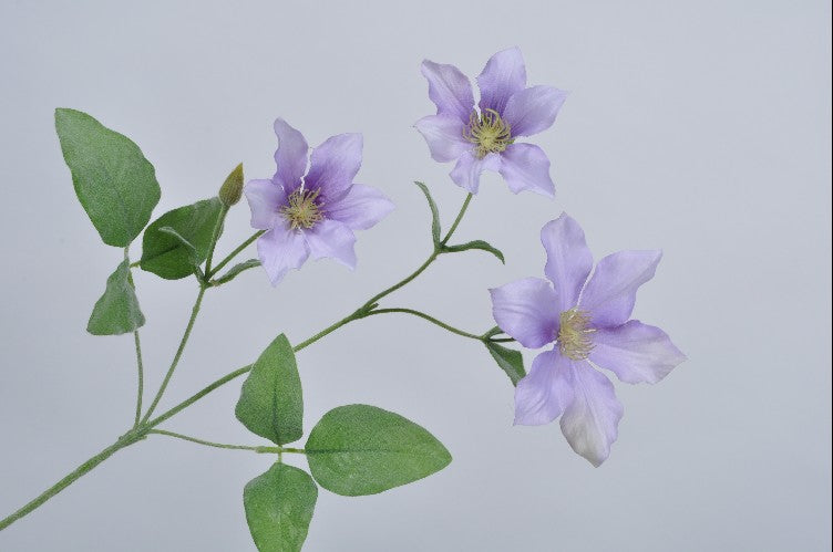 Clematis tak lavendel - Valeur home Decoration