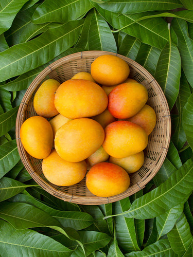 Benefits and side effects of mango on skin