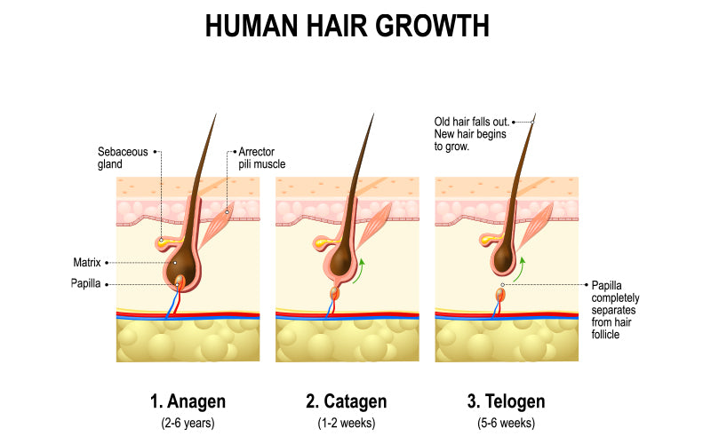 Why does hair loss occurs from covid