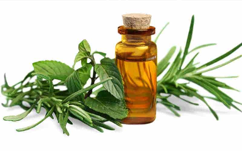 benefits of Tea Tree Oil for dandruff