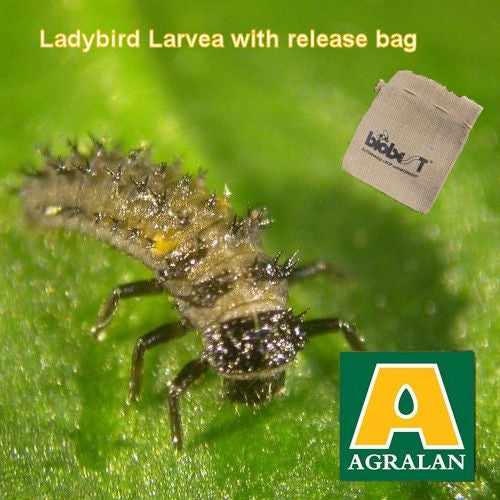 Aphid Control with Ladybird Larvae (Adalia)