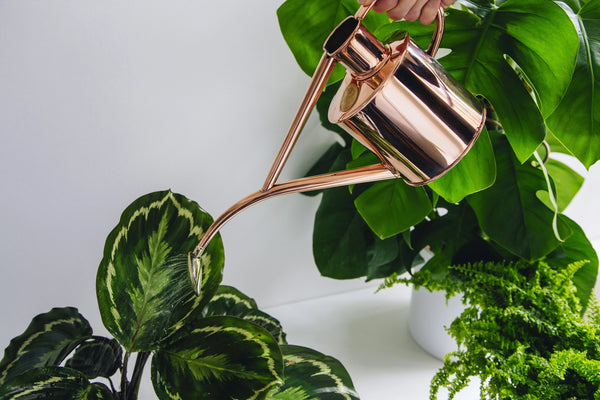 Haws Watering Cans 1L - Copper watering house plants