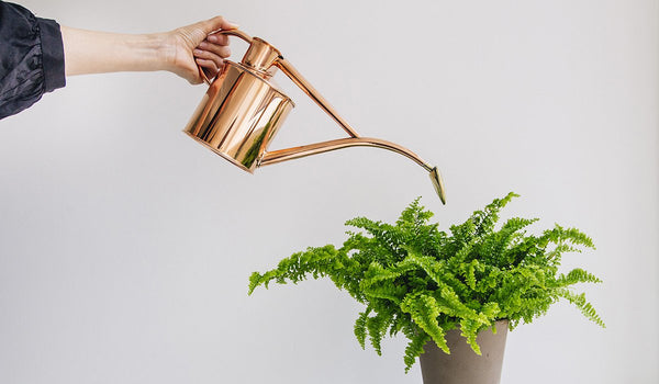 Haws Watering Cans 1L - Copper watering house plant