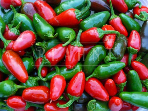 Organic Hot Pepper Jalapeno Chilli Pepper Seeds