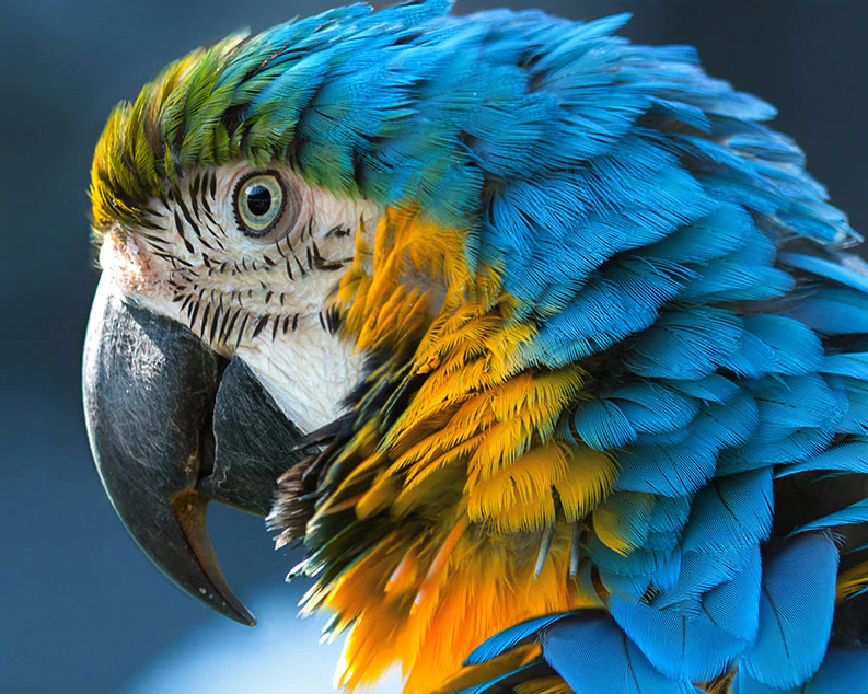 A Colorful Parrot With Cute Eyes Kit