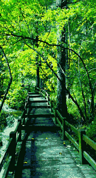 Beautiful Bridge In Forest