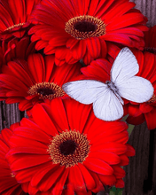Load image into Gallery viewer, Flowers and Butterfly