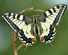 Load image into Gallery viewer, Colorful Butterfly Kit