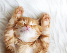 Load image into Gallery viewer, Cute Sleeping Cat Kit