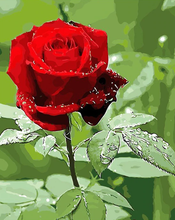 Load image into Gallery viewer, Due On Red Rose Kit